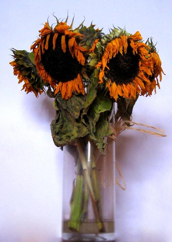 Pictorial metaphor for autumn