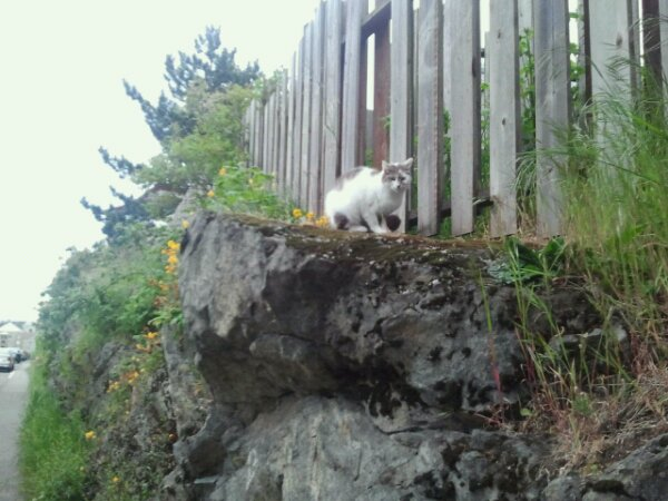 White cat by a fence.