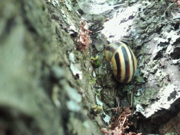 snail in a tree