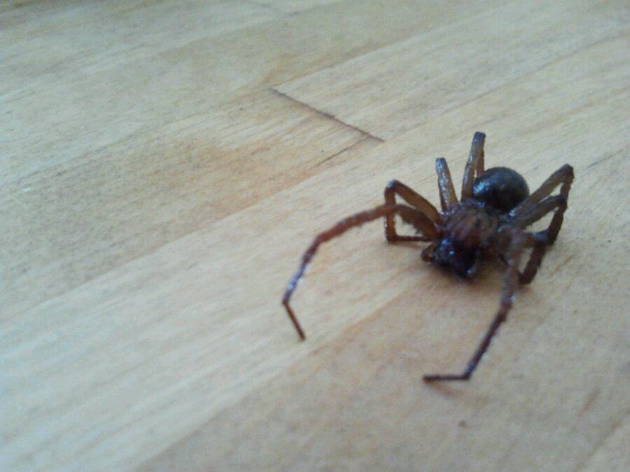 Spider on top of a table