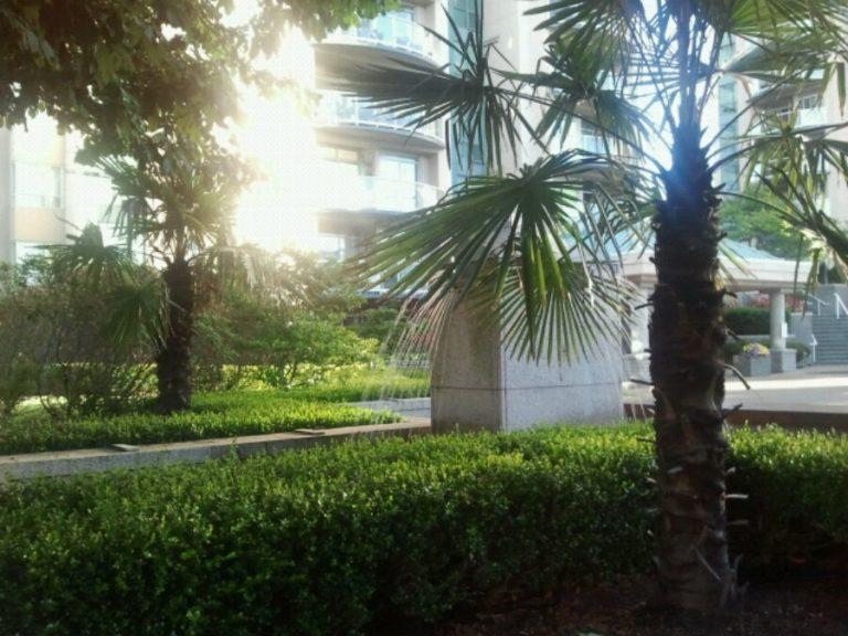 Stunted palm trees.