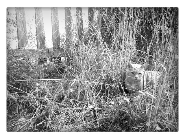 A cat in the grass by the fence