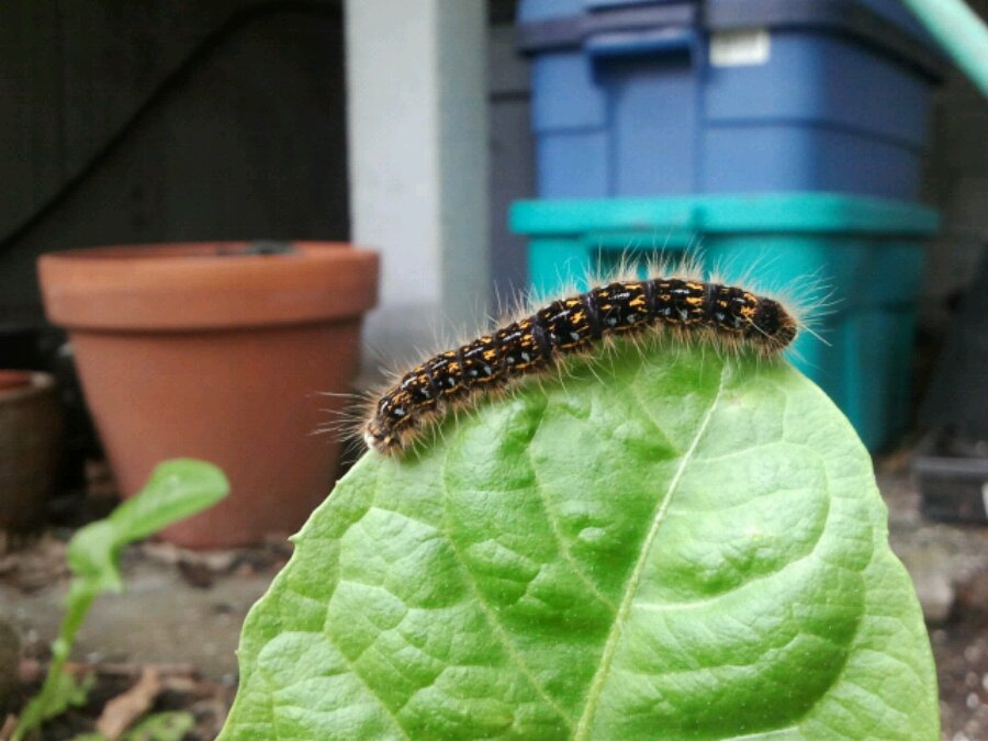 Caterpillar with door step in background