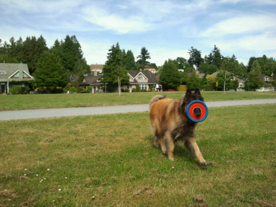 Jona the dog and a frisbee