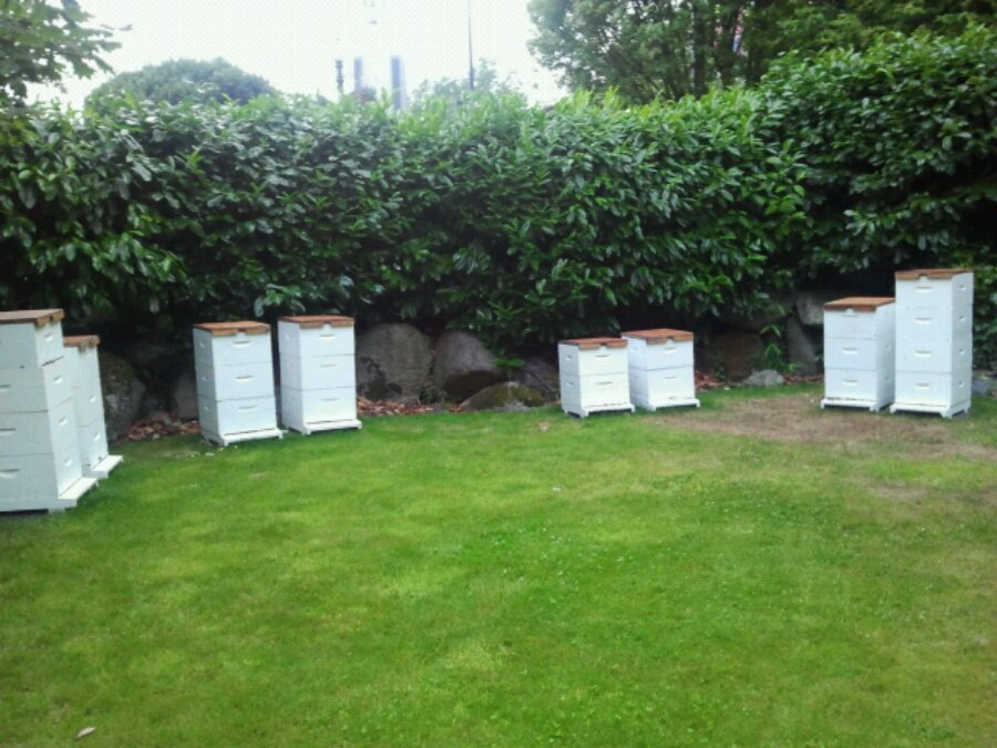 Bee hives at the Empress