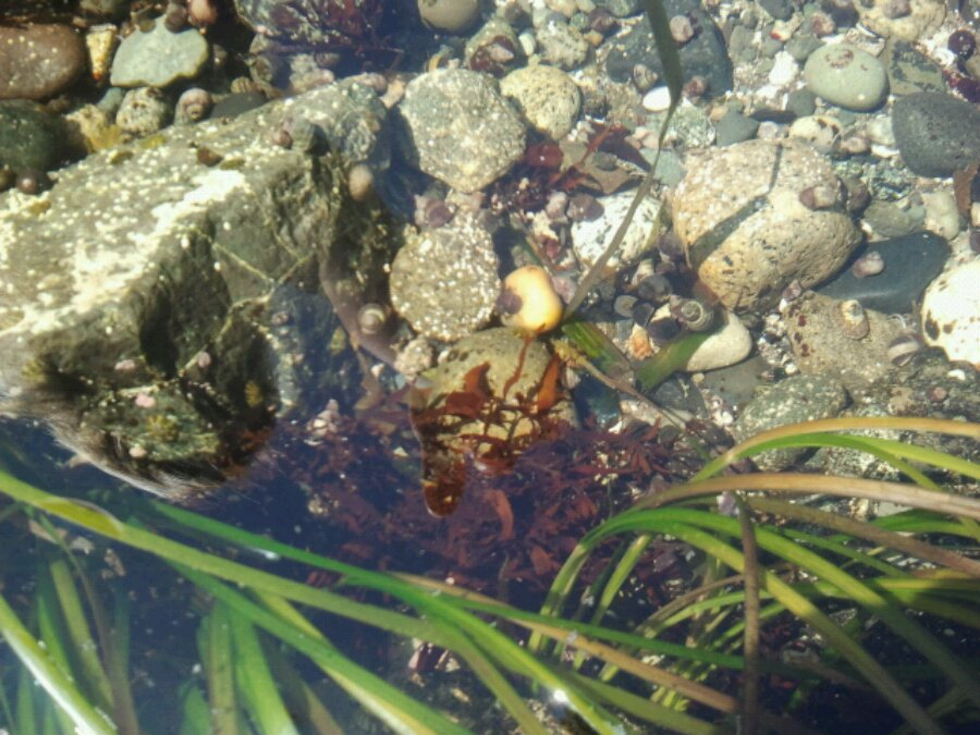 Tide pool creatures