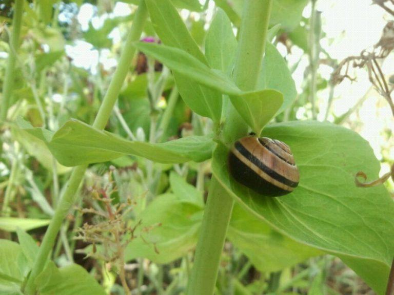 Summertime snails