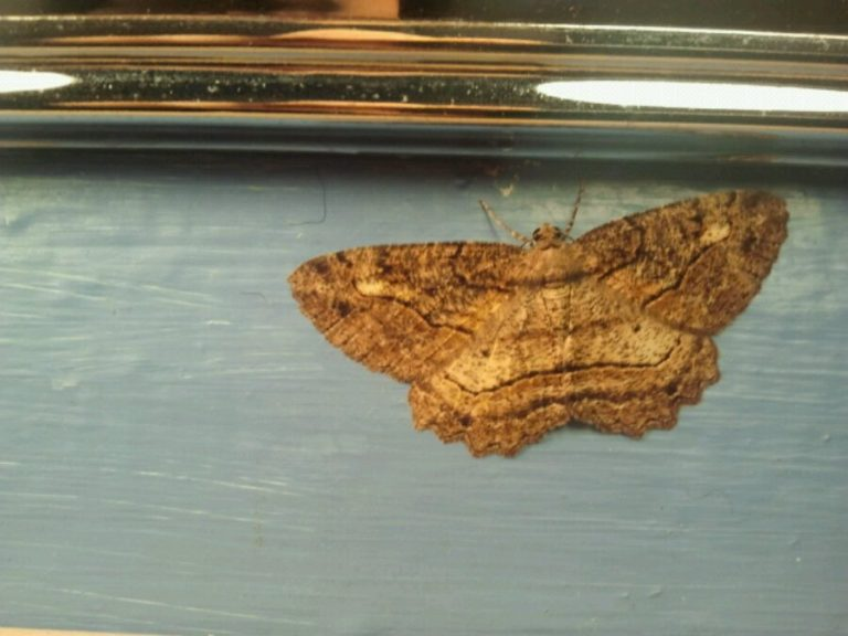 Moths are coming in