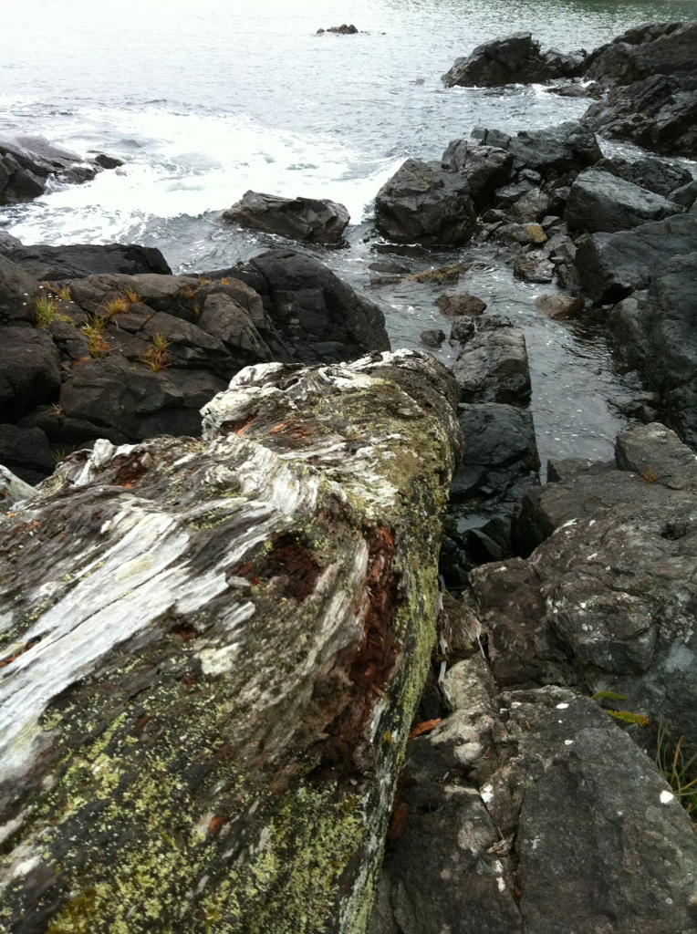 A large log lies at the edge of the ocean