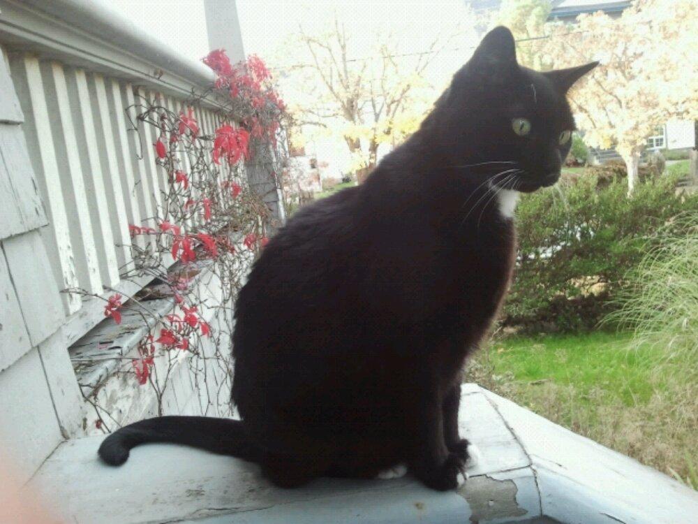 Black cat overlooks front yard in Victoria West