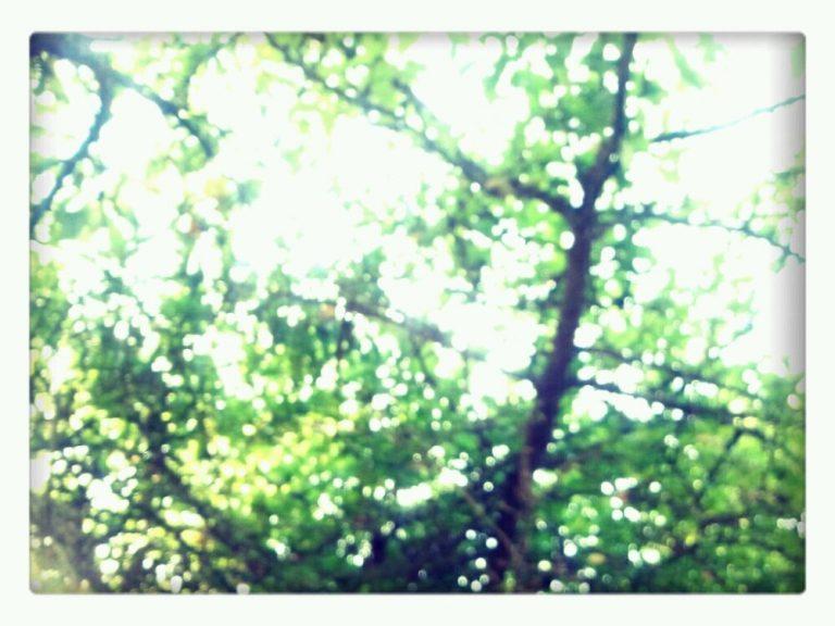Backyard: blurry