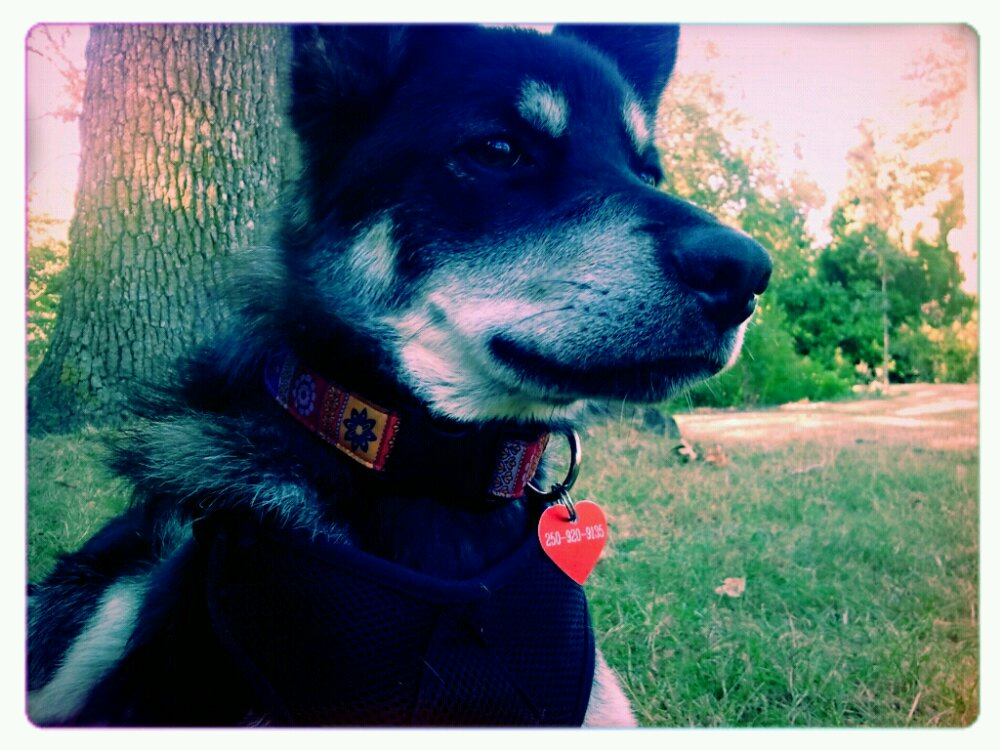 close up portrait of Luna the dog standing obediently in a park