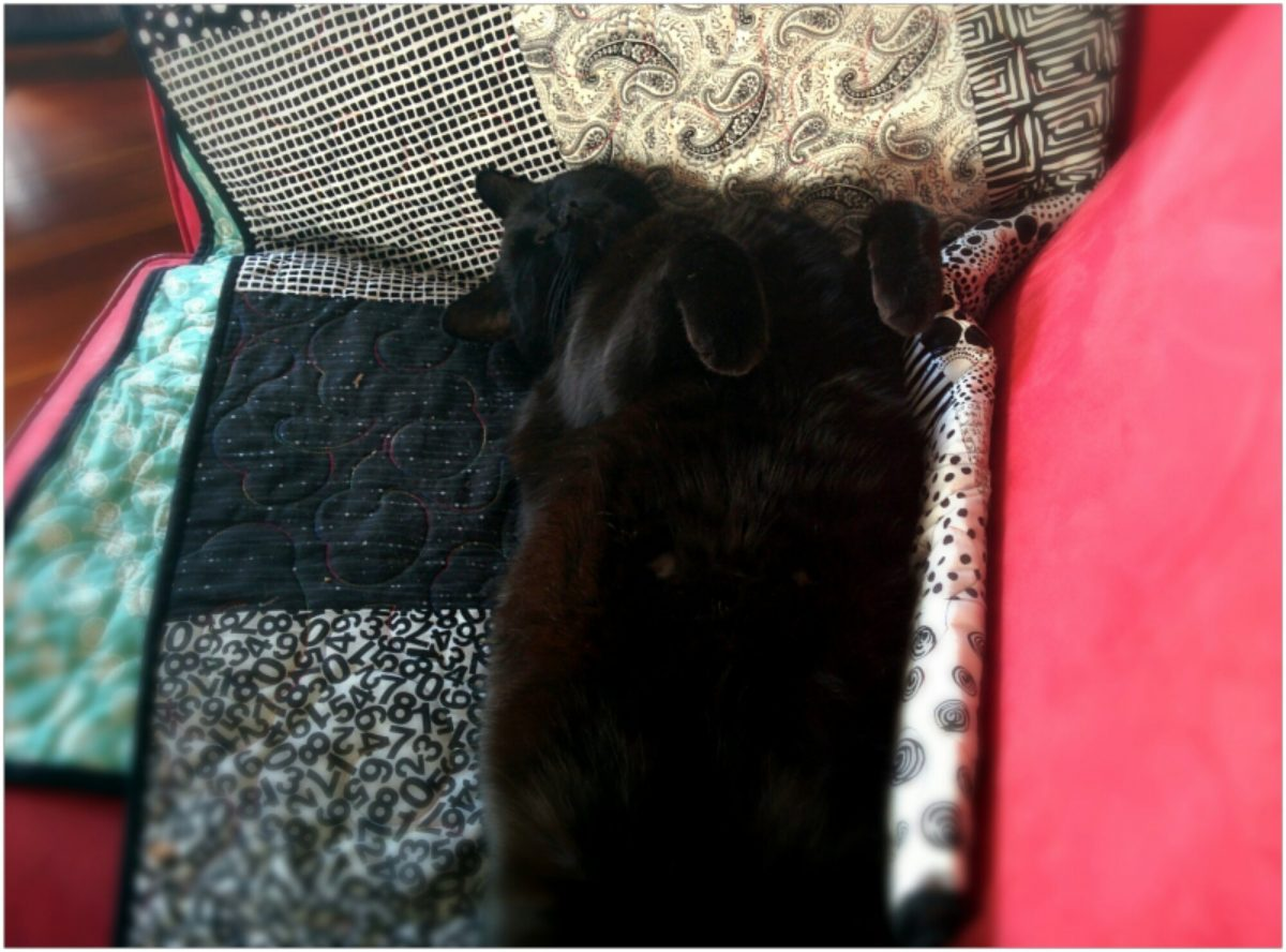 Black cat sleeps on her back with legs in the air.
