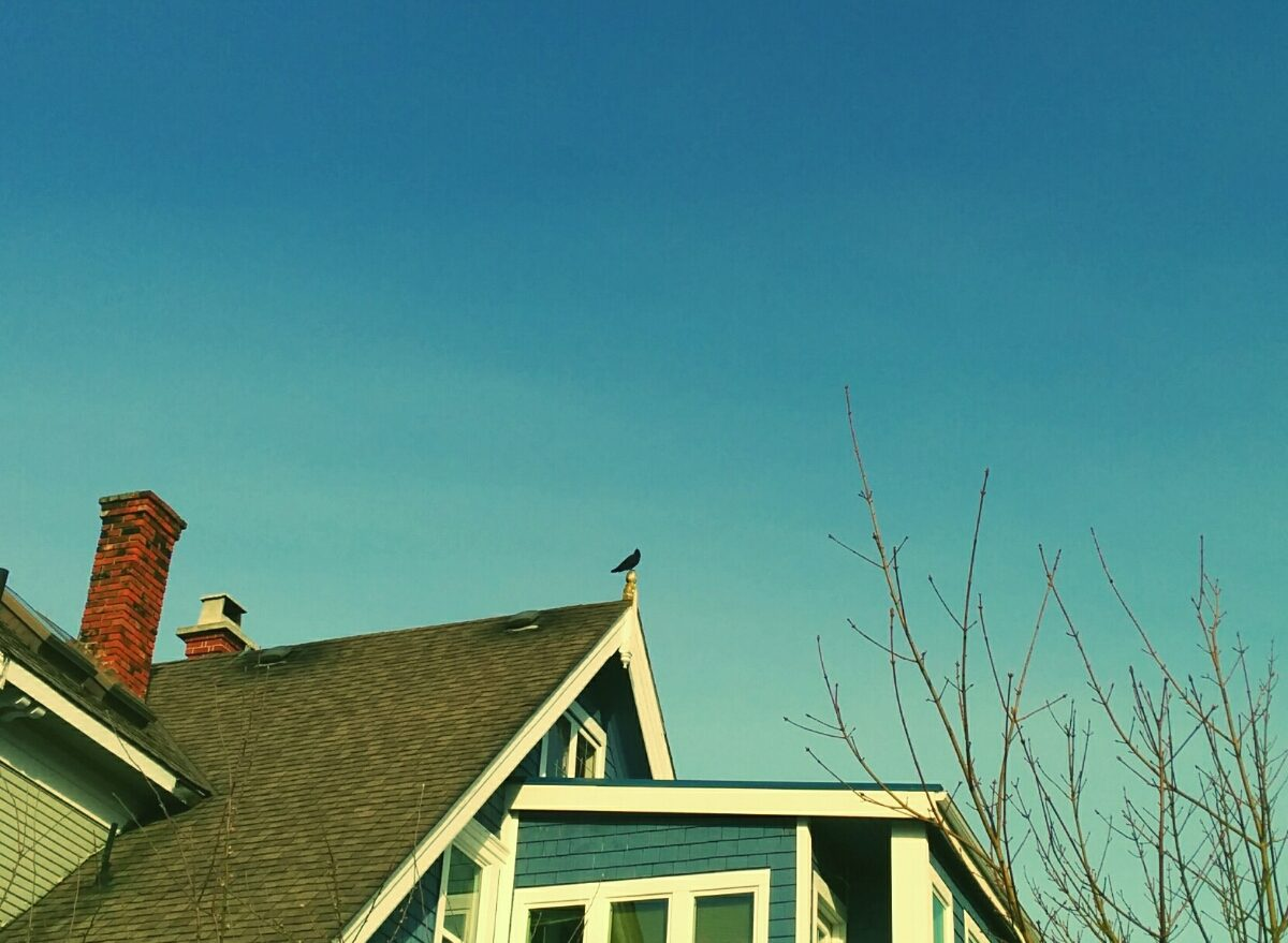 A crow sits on the peak of a house on a clear blue sky day in VicWest