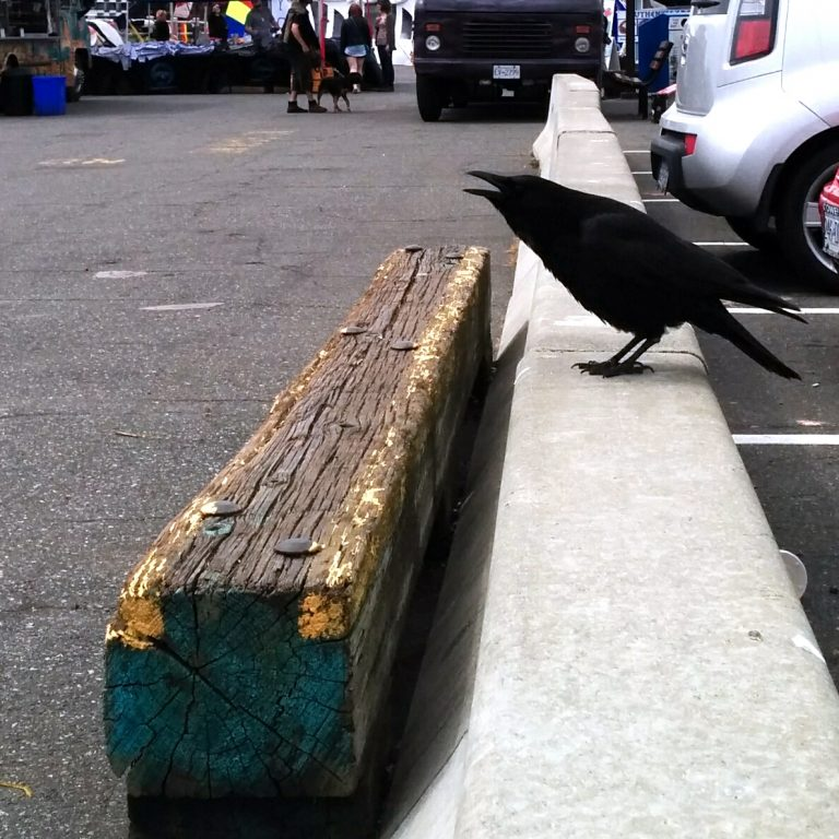 Crow in the inner harbour