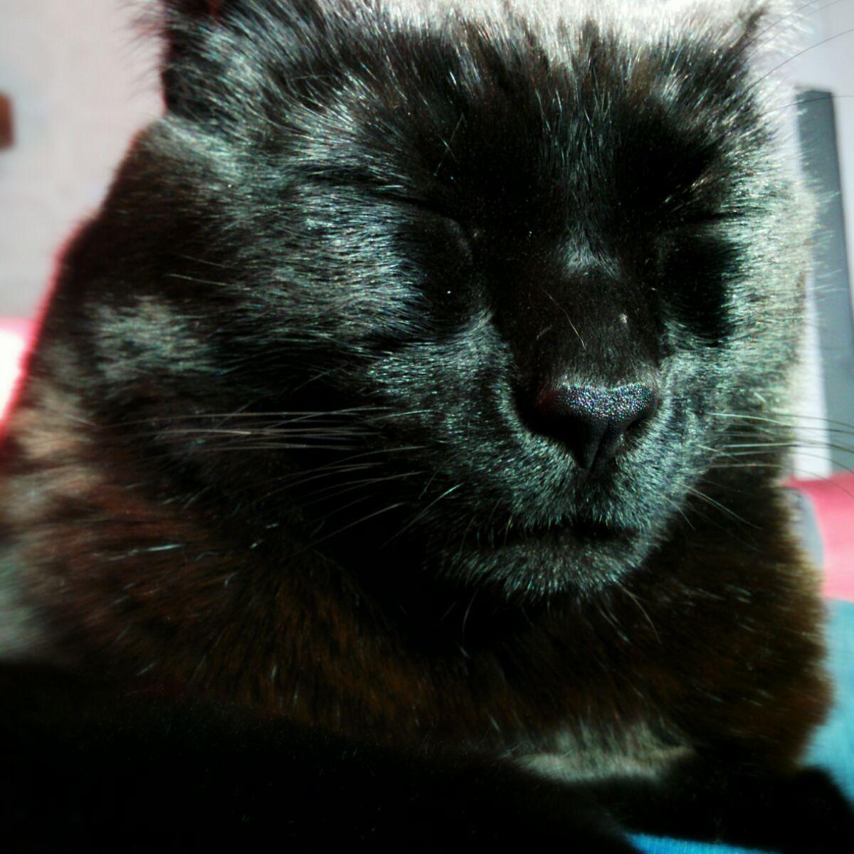 black cat takes a cat nap