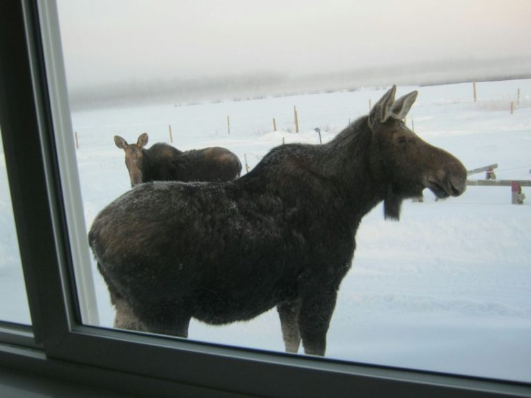 Donna Arnott took this photo in December from her living room