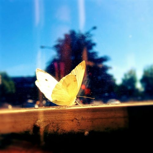 Moth in the window, at Swan's