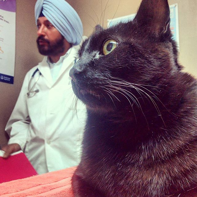 Caturday! At our favourite, awesome, vet getting Midnight's annual rabies shot