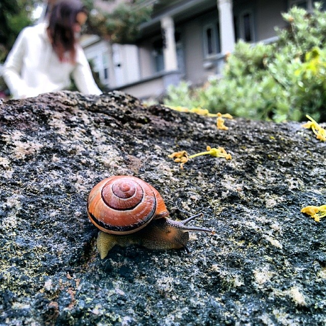 A snail close up on Northcott Ave.