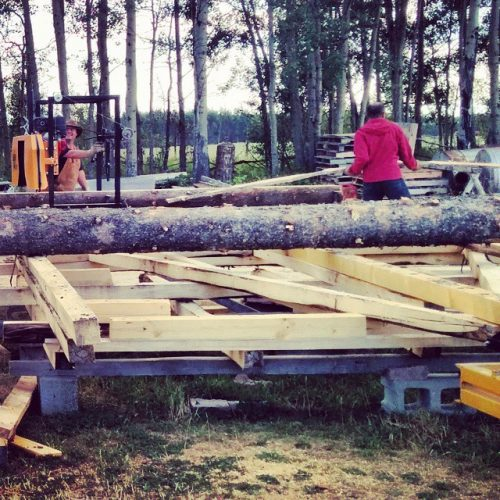 Here's @oliveridley helping my brother with the sawmill in the backyard