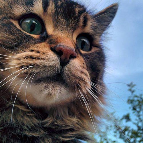 Upstairs neighbour cat