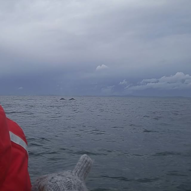 Whale watching with my mom on the Salish Sea