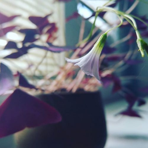 February haiku:  Light shimmies and shakes Embraces fragility Tenderness is life