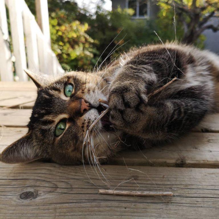 Hello Autumn; cat neighbours