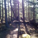 Hikers climb a hill on a sunny afternoon in the rainforest on Galiano Island.