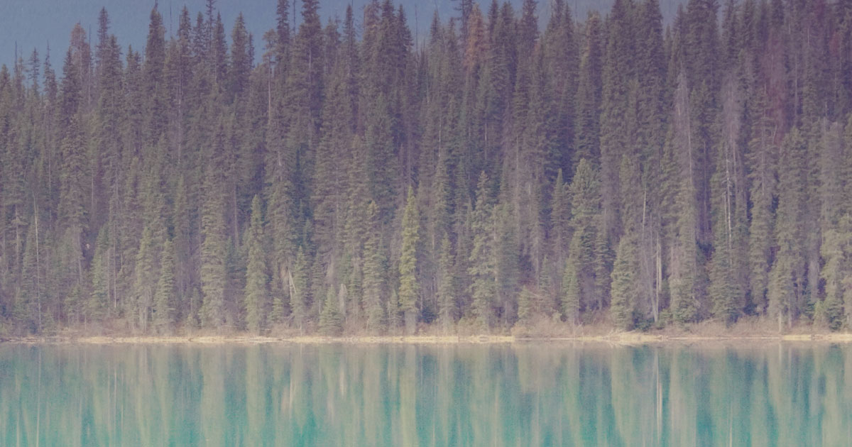A northern boreal forest of evergreens stand dustily on the shores of lake.